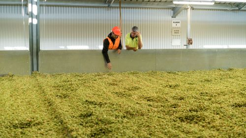 Win A Double Pass To High Country Hops